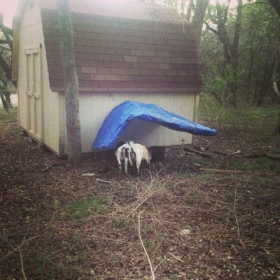 goatshelter